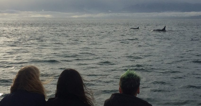 Whales in the distance…
